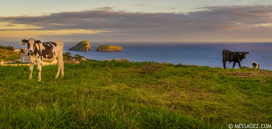 Original Azores Terceira Island Landscape Photography 21 By Messagez.com