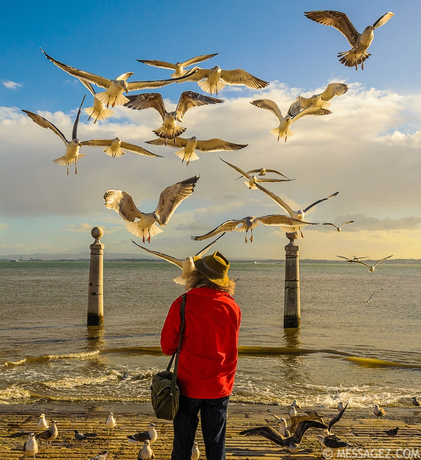 Lisbon Bird Whisperer Fine Art Photograhy 4 By Messagez.com