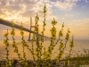 Original Flower Lisbon Bridge Sunrise  Photography 2 By Messagez.com