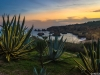 Algarve Beach Cactus Sunset Photography By Messagez.com